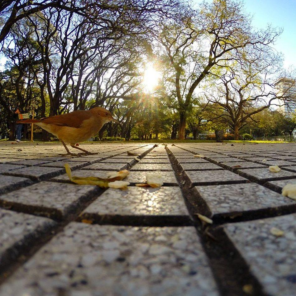 Ladron sin filtro Goprohero3 Gopro Plazasanmartin Buenosaires