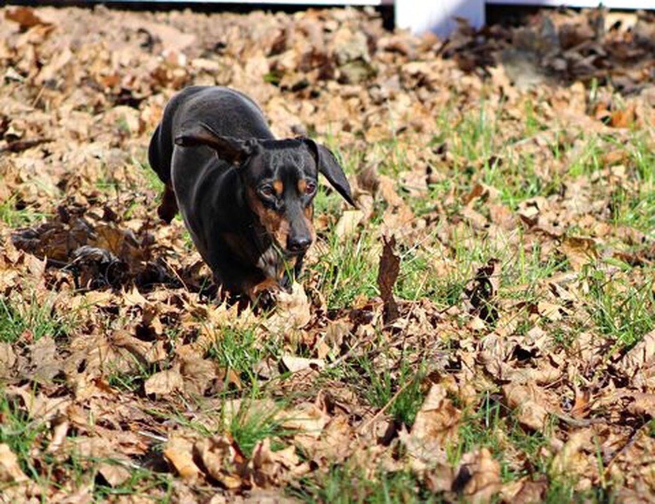 Watson Photography Dogs Of EyeEm Stopmotion Dogslife