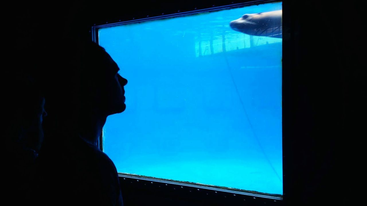 Barcelona. Seal. Underwater Indoors  Silhouette Barcelona, Spain Animal Aquarium Nature