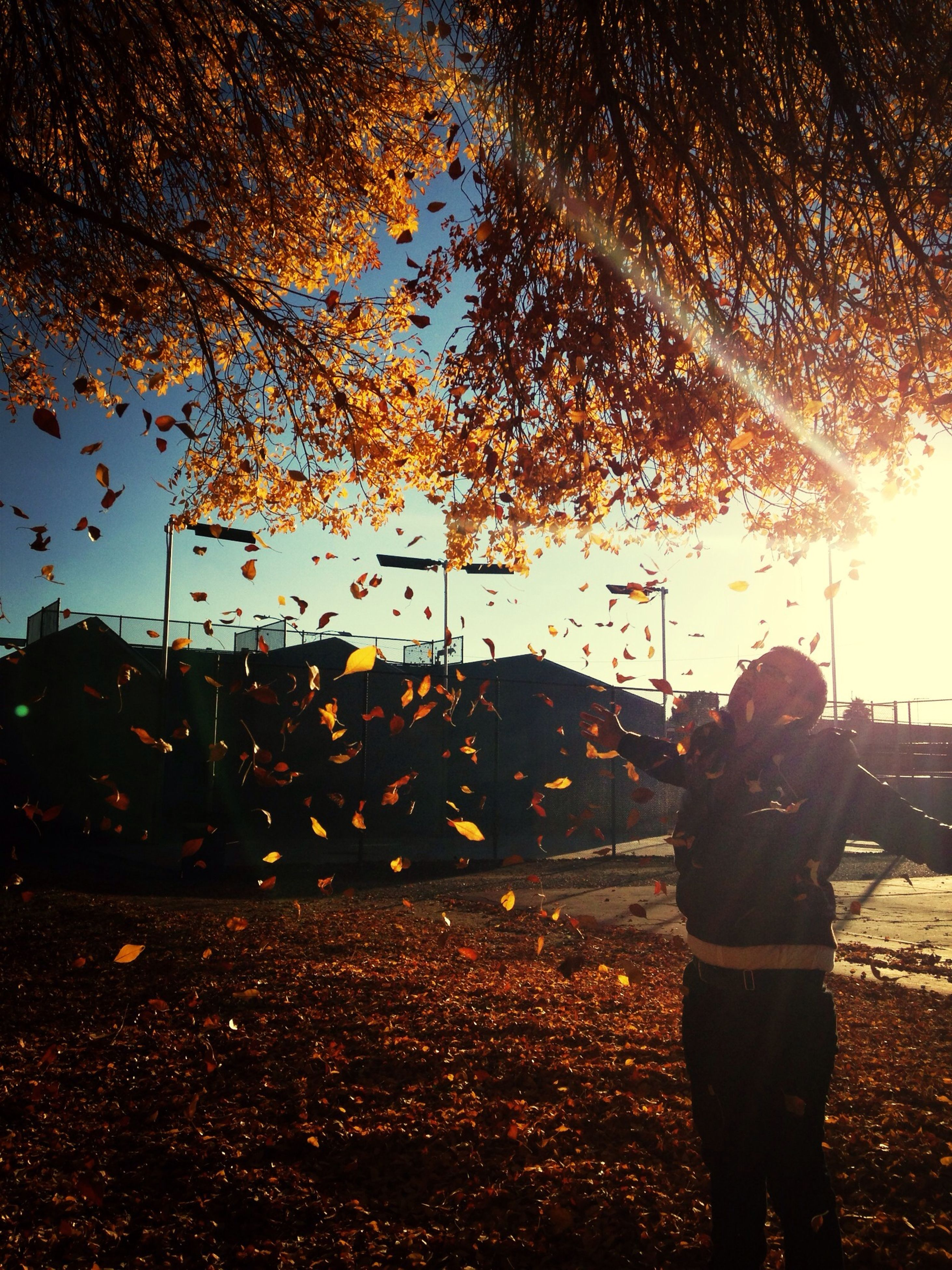 lifestyles, tree, leisure activity, men, street, season, rear view, standing, walking, full length, silhouette, road, rain, transportation, person, city, illuminated, car