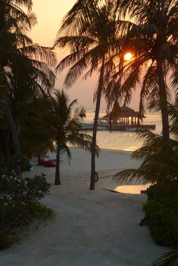 Sunset in paradise Beach Sea Palm Tree Tree Beauty In Nature Tranquil Scene Tranquility Water Scenics Sunset Nature Sand Idyllic No People Horizon Over Water Vacations Outdoors Growth Sky Travel Destinations