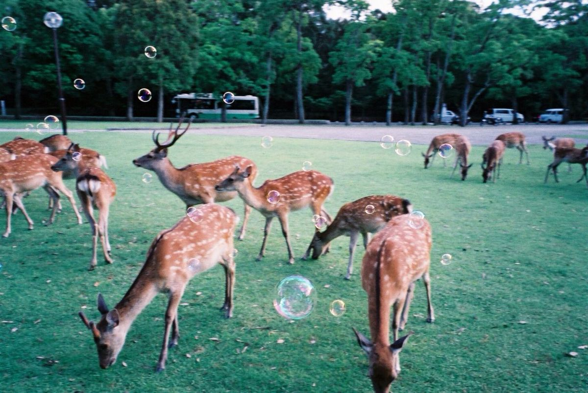 Around The World By Lufthansa Nara,Japan