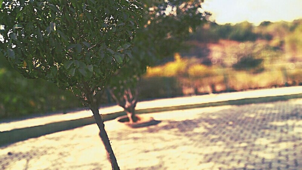 Tree Nature_collection Motion Blur Greenary :-)