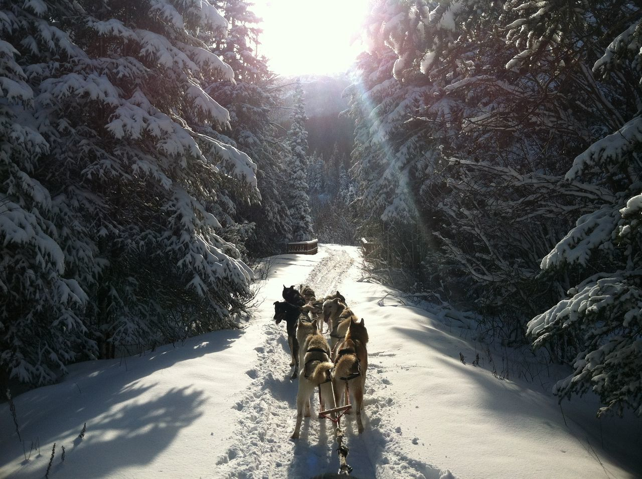 Adventure Alaska Alaskalife Alaskan Nature Beautiful Beauty In Nature Dog Dogmushing Eagle Fresh Air Landscape Lifeisgood Meditation Mushing Nature Outdoor Photography S Snow Tranquil Scene Tranquility Winter Winter Trail Winteradventures Winterscapes Winterwonderland First Eyeem Photo