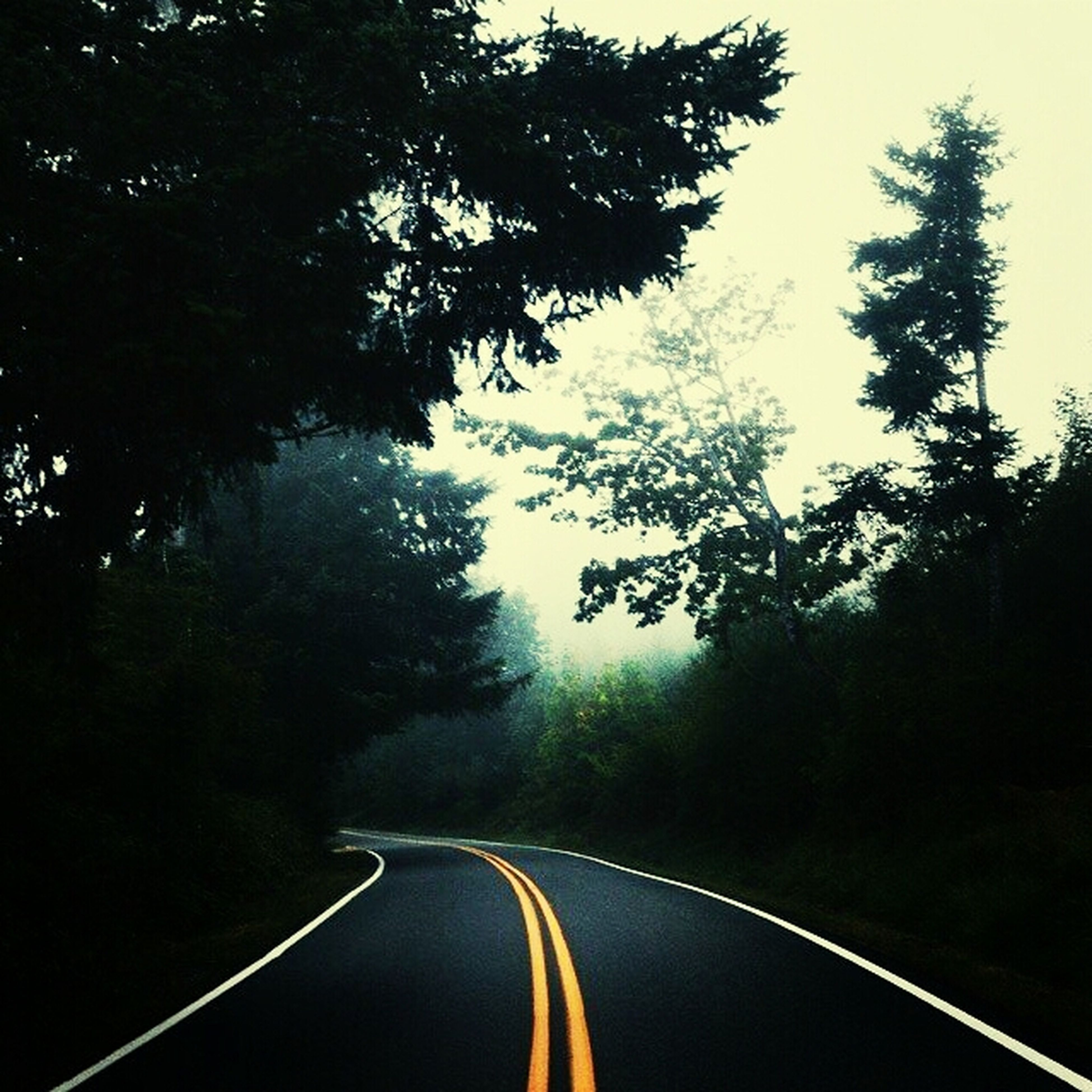 transportation, the way forward, road, diminishing perspective, road marking, tree, vanishing point, country road, windshield, empty road, sky, mode of transport, empty, dividing line, double yellow line, travel, tranquility, nature, asphalt, clear sky