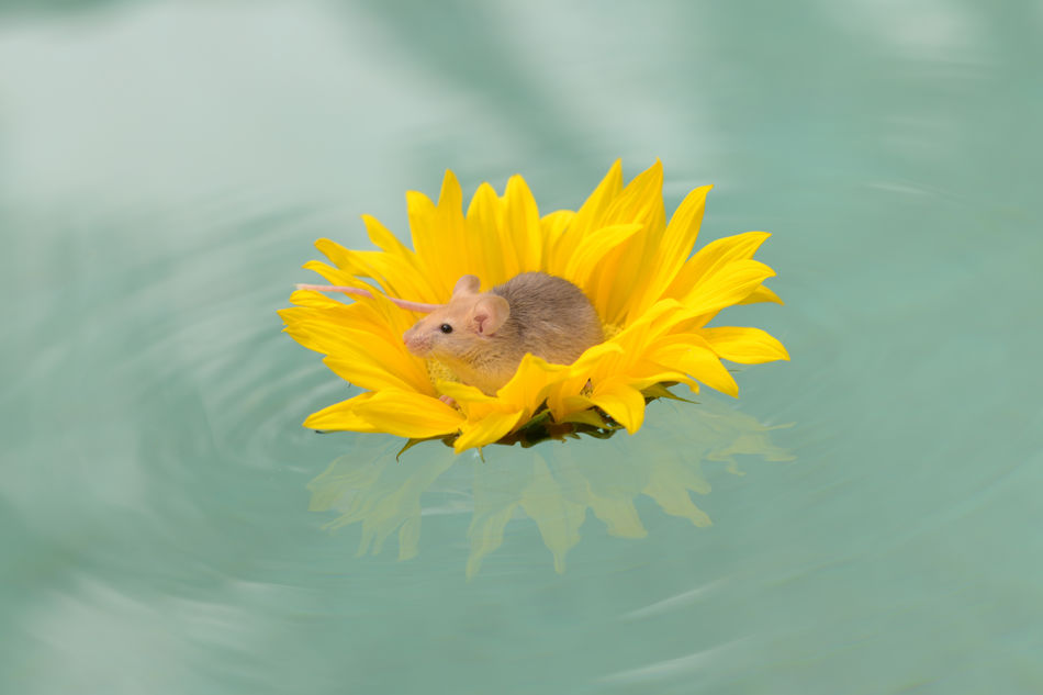 Beautiful stock photos of sonnenblume,  Animal Themes,  Animal Wildlife,  Animals In The Wild,  Beauty In Nature