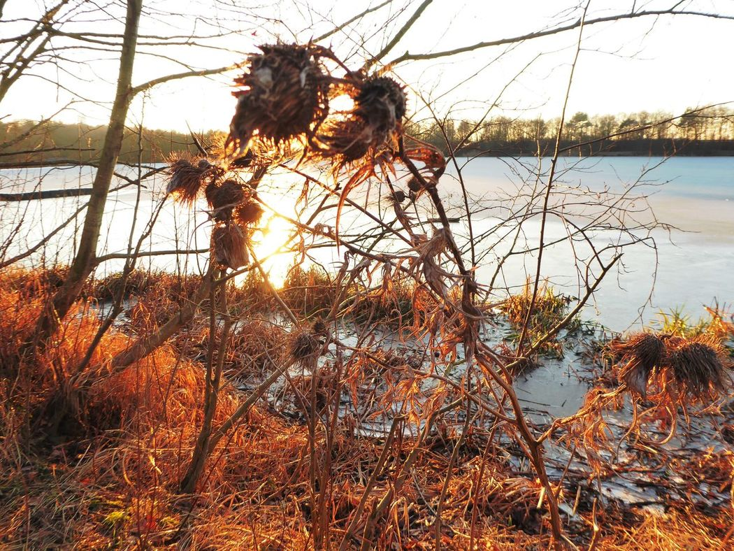 Plants In Sunset😍 Lieblingspflanzen 😍 Sunny Winter Day Tranquil Scene Tranquility Country Life Lakeside Beauty For My Friends 😍😘🎁 Beauty In Winter😍 Beauty In Nature Frozen Lake Nature Lakesideview Frosty ⛄ Wintertime ⛄ Fragility Of Life Enjoy That View Cold Temperature No People Favoritelake Love That View Water Sunlight Through Leaves Orange Color