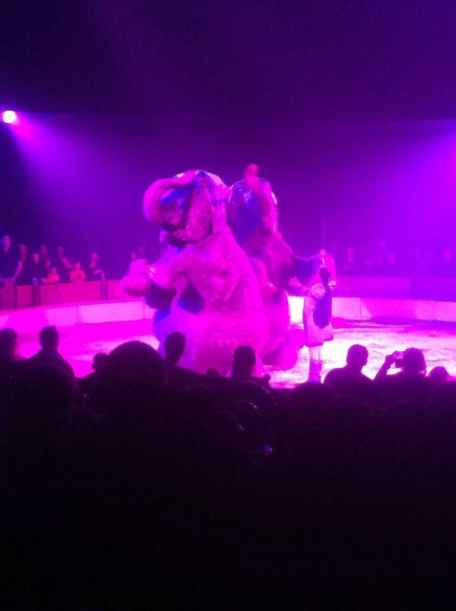elephant rose Circus Elephant Pink Friends
