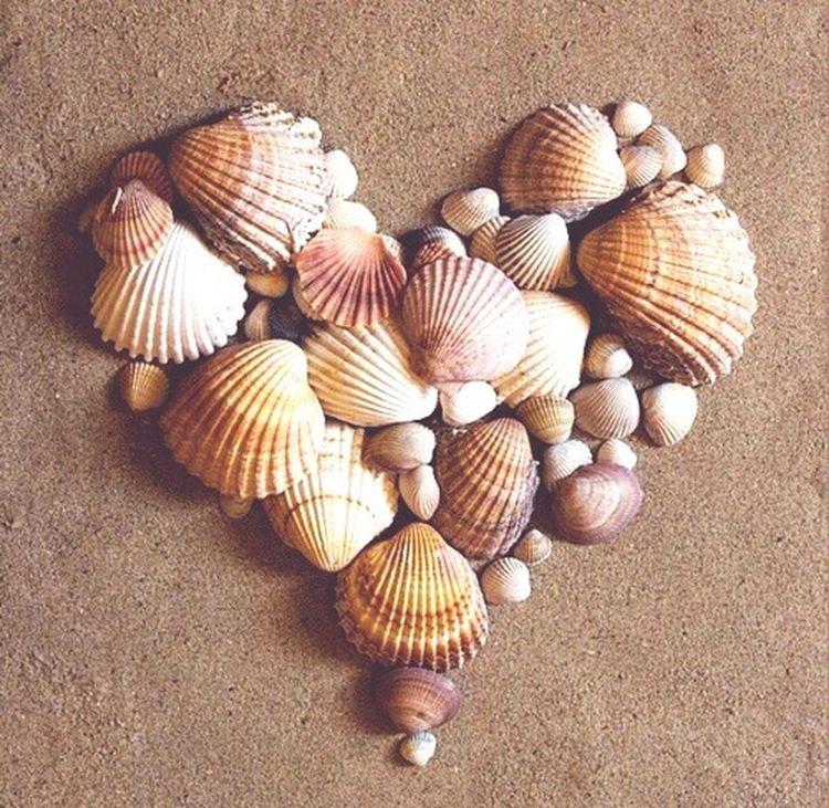 Heart of shells 💗 Beach Summer Shells Love