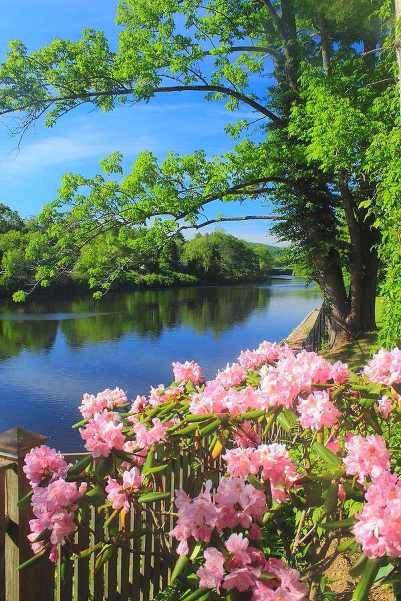 Amazing Heaven Beauty Love Backgrounds Flowers Love ♥ Beautiful Garden Photography Nature Best