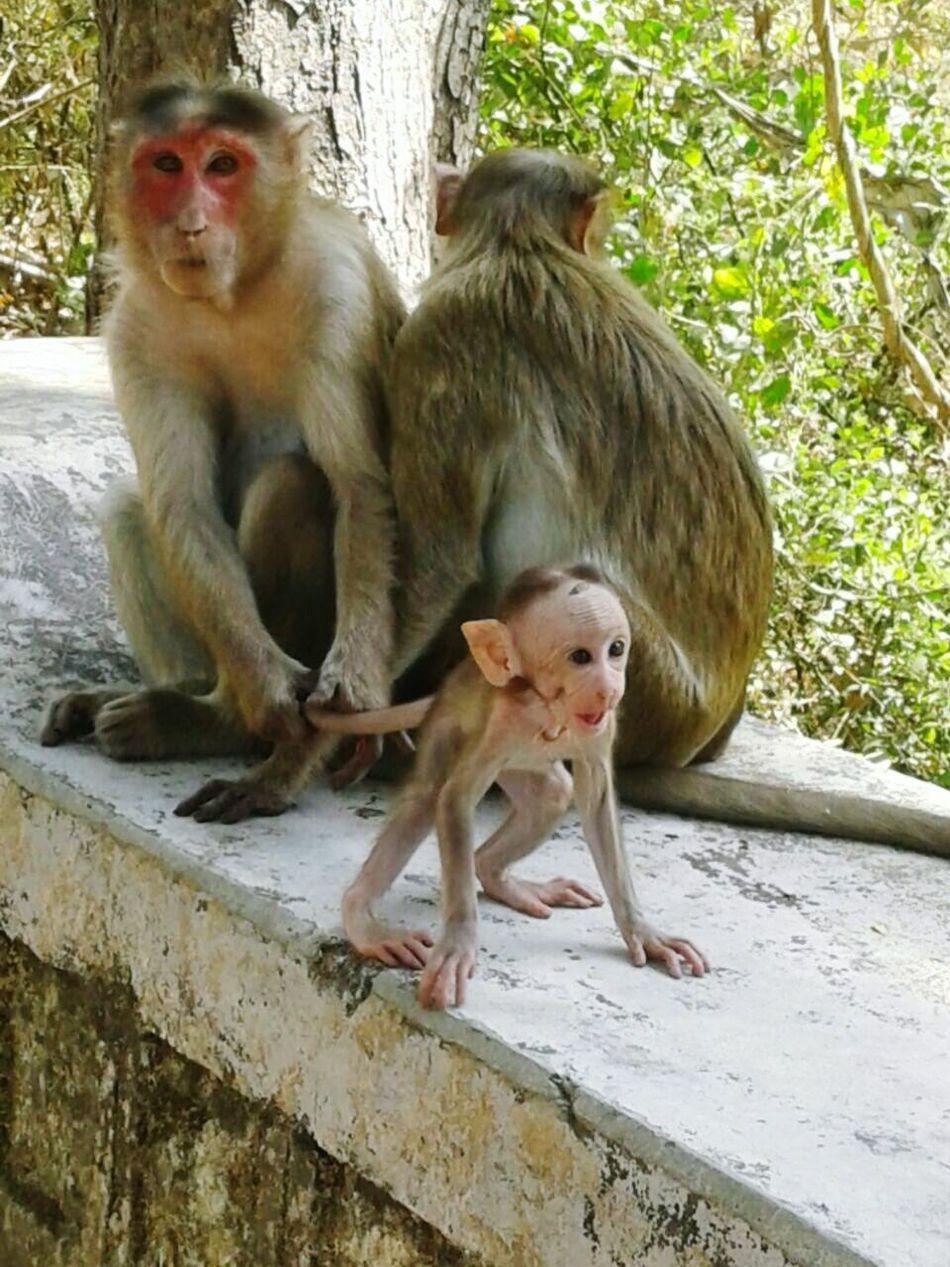 Stay here plz 😍❤ say's Mom.. Motherlove Monkeyfamily Bonding ♥ EyeEmNewHere