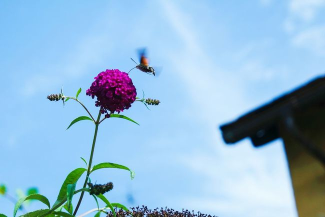 Up in the Sky Lookingup Flowerporn Flowers, Nature And Beauty Nature_collection Nature Photography Color Palette Eyeemphoto Eye4photography  Fresh 3 Open Edit EyeEm Best Shots Summer Memories 🌄 Insects
