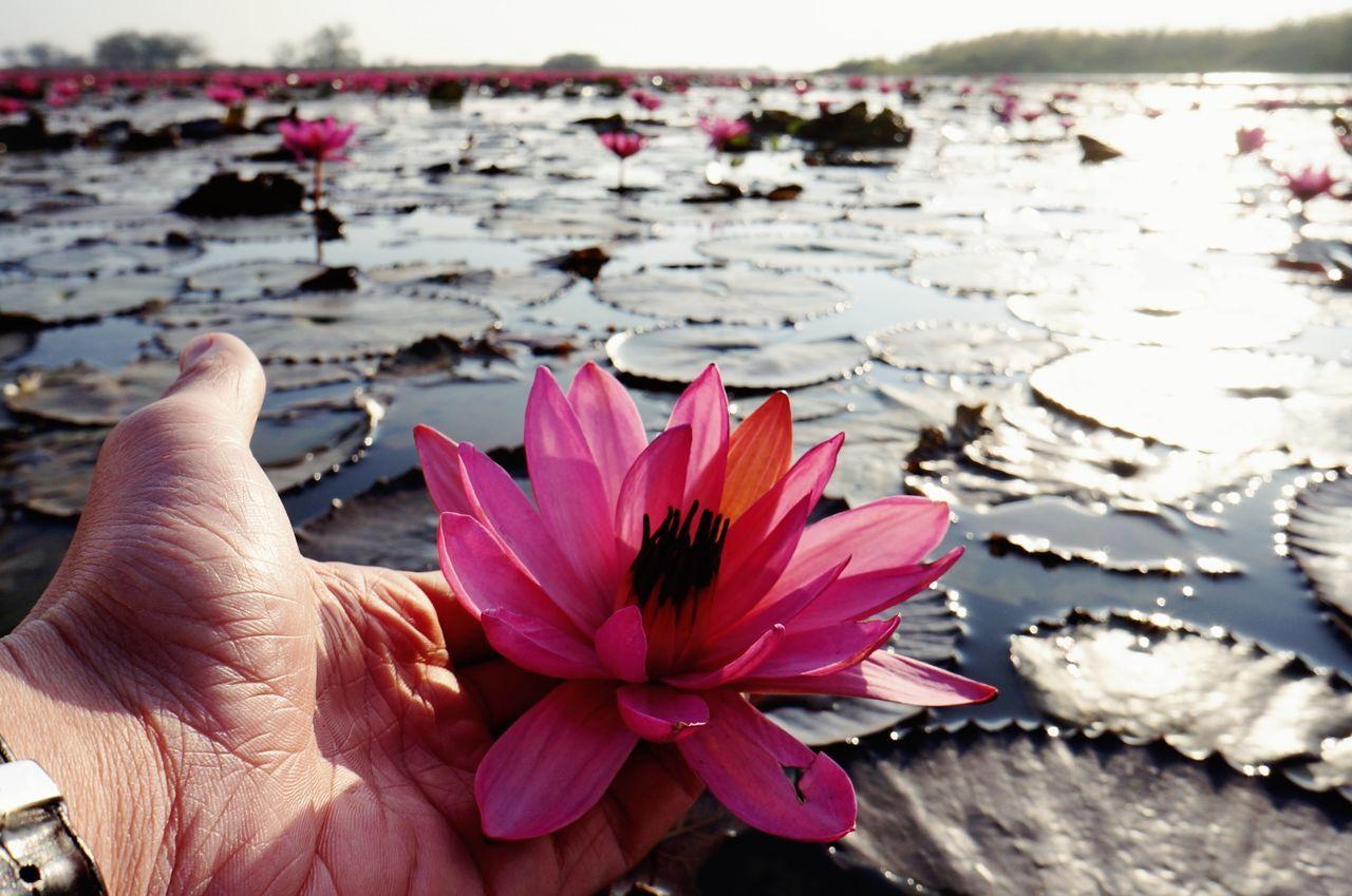 Dawn of the day. Morning Enjoying Life Hello World Lotus Flower Thailand Thailand_allshots Thai Dawn Morning Sky