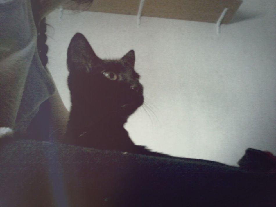 Catnap Love Cats Of EyeEm <3 <3