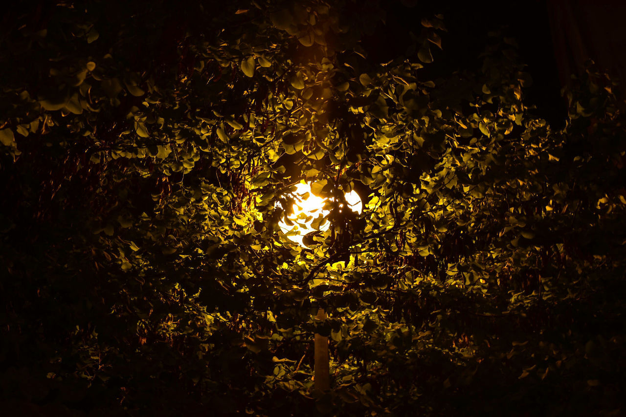 Low Angle View Of Illuminated Lamp Amidst Tree At Night