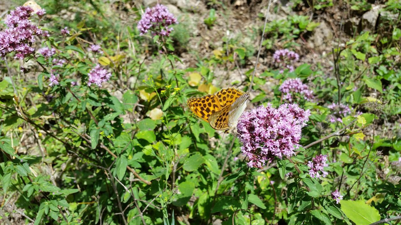 High Angle View Of Butterfly On Purple Flower During Sunny Day