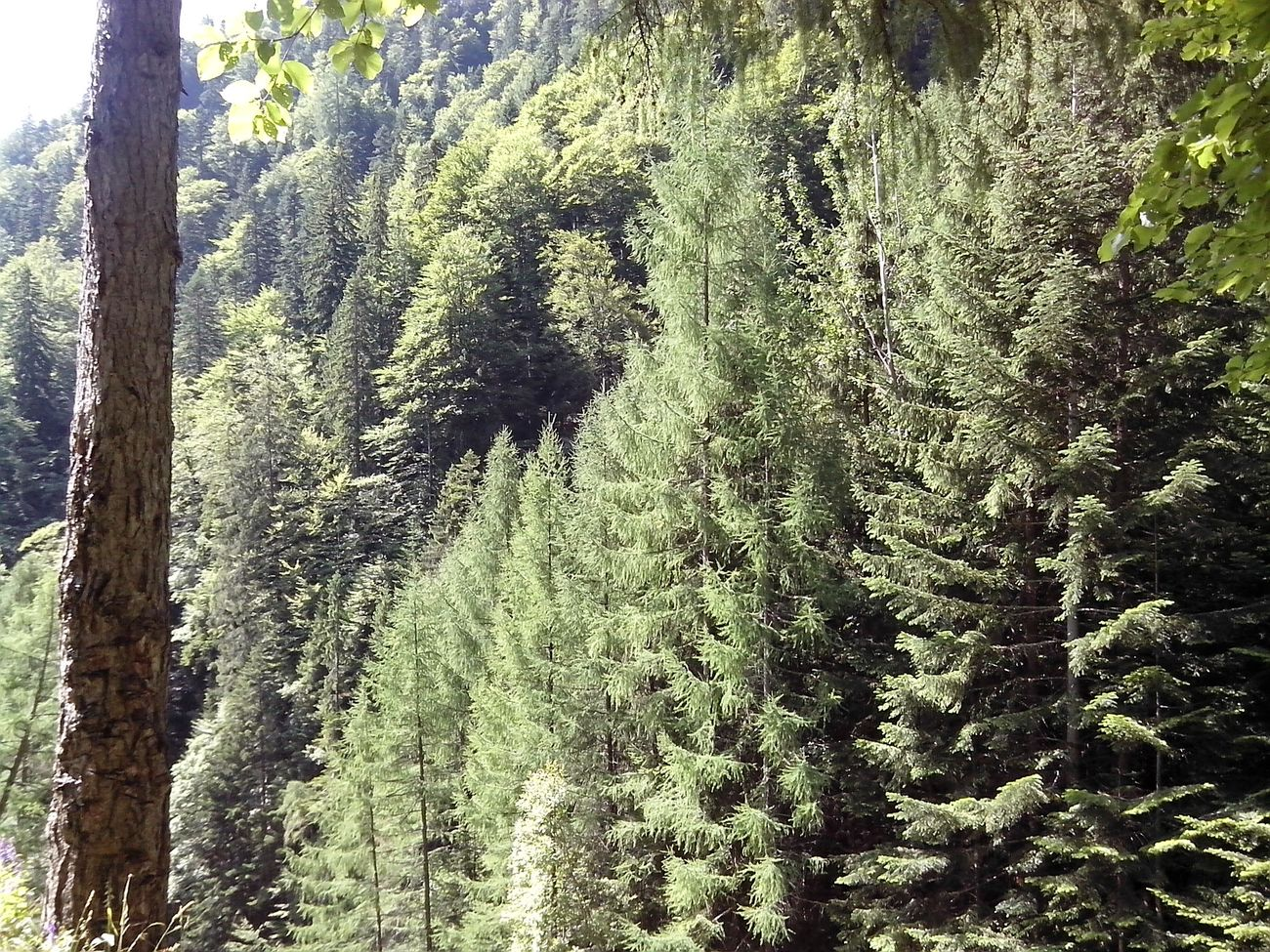 Forest Mountains Carpati Nature 2014 Trip Busteni Summer Taken By Me Romania