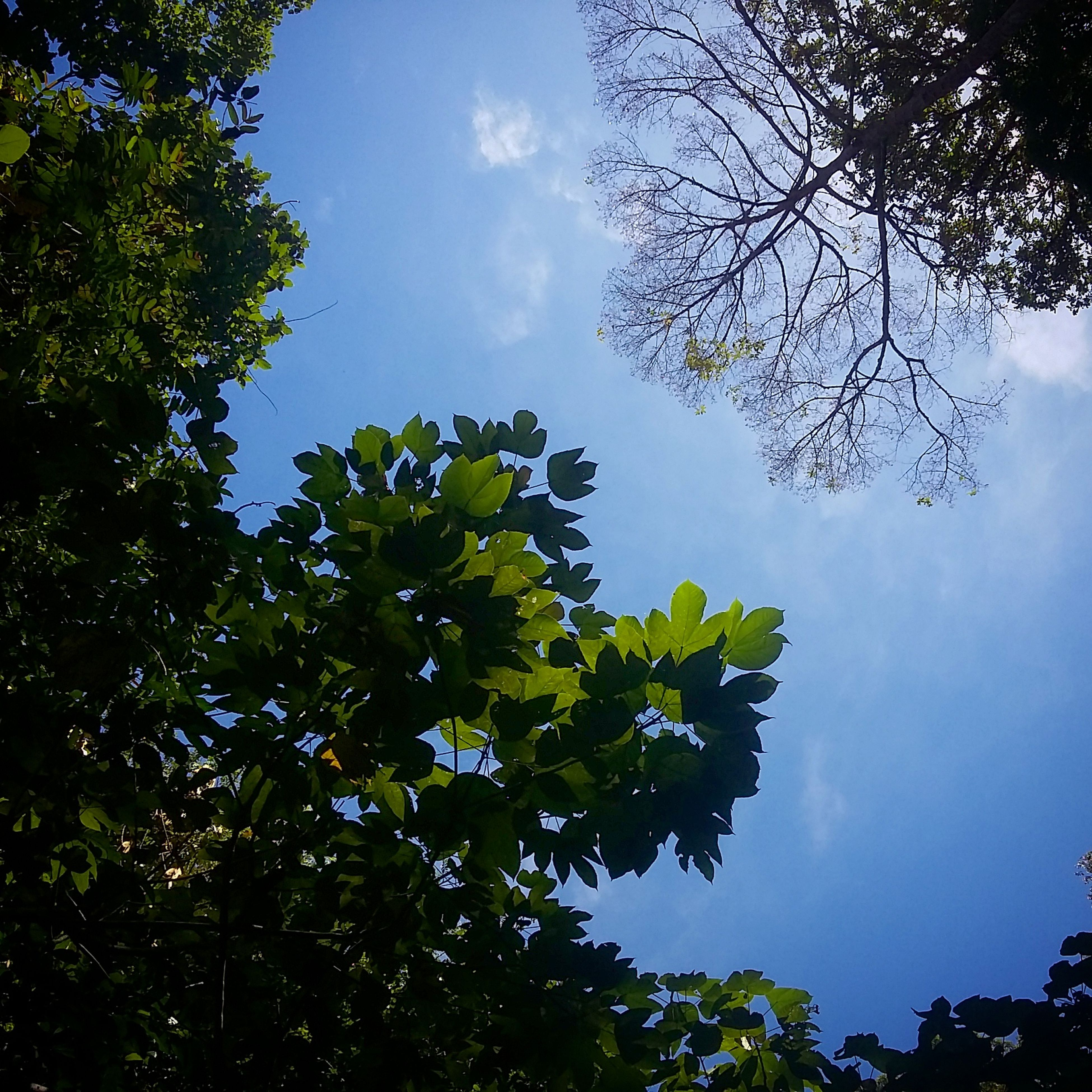 tree, low angle view, sky, branch, growth, cloud - sky, tranquility, nature, beauty in nature, cloud, green color, leaf, scenics, blue, cloudy, tranquil scene, outdoors, no people, day, silhouette