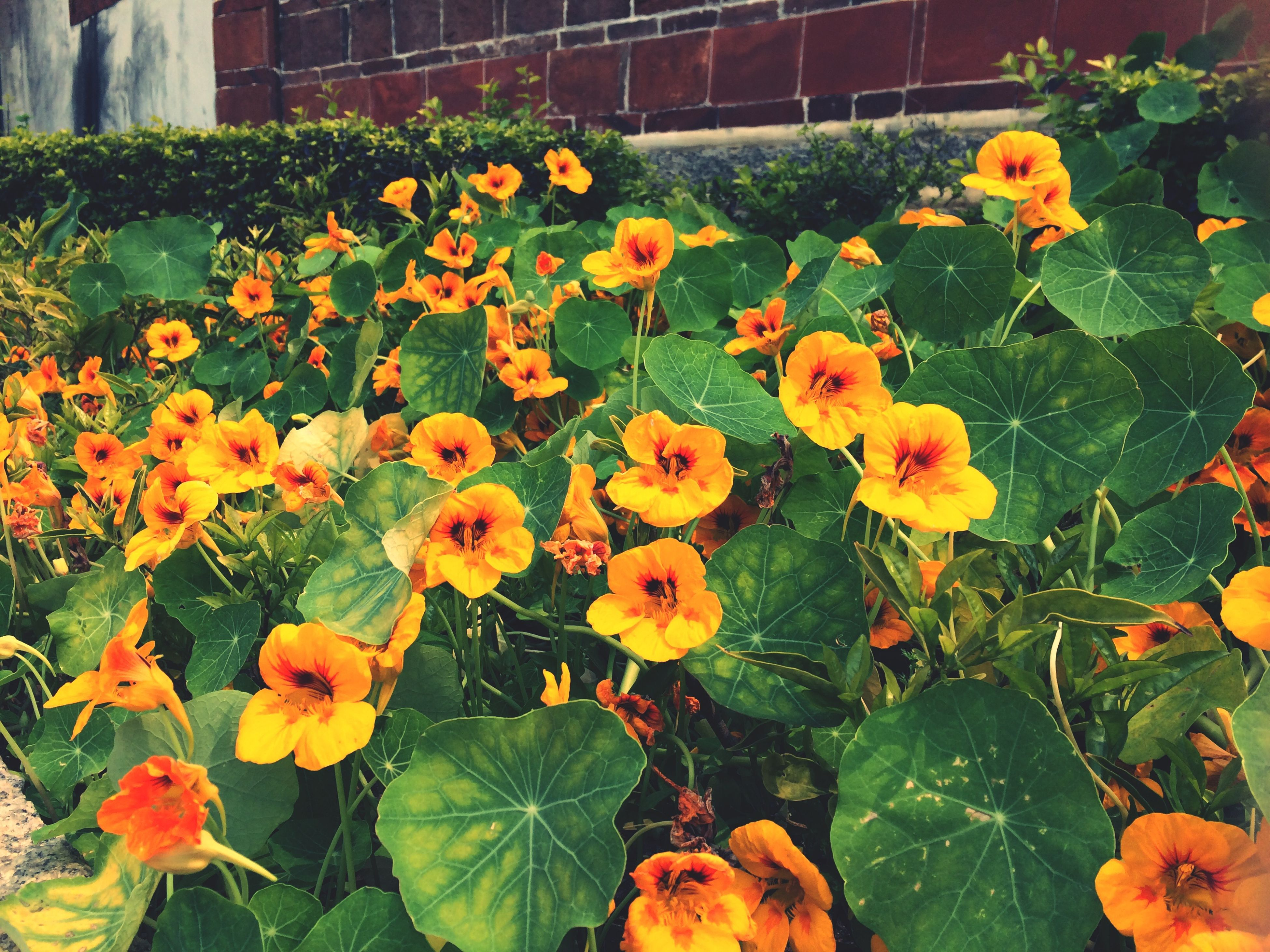 flower, freshness, fragility, petal, yellow, flower head, growth, beauty in nature, blooming, plant, nature, leaf, in bloom, high angle view, green color, orange color, blossom, day, outdoors, park - man made space