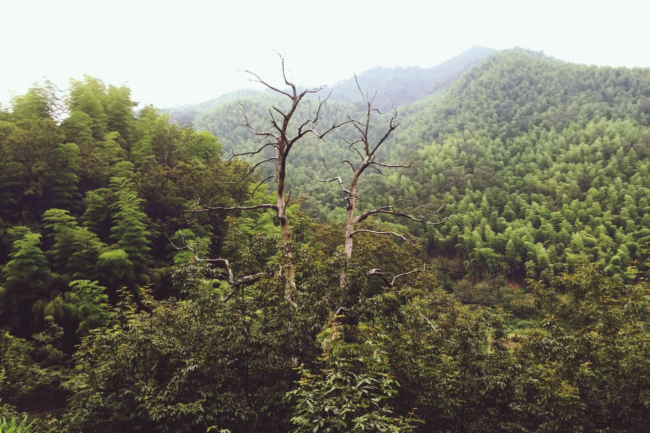Nature Tree Green Died Mountains