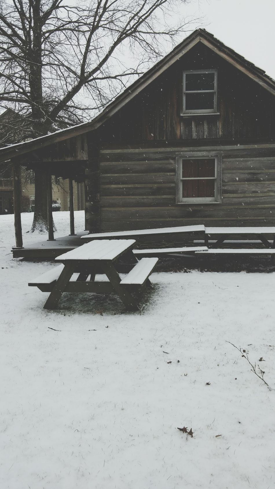 Miles Away Cabin Snow Outdoors Nature Winter Tree Day No People Architecture First Eyeem Photo EyeEmNewHere