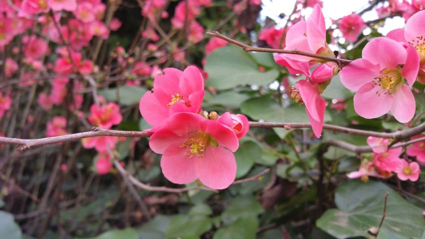 Branch with pink blossoms Dark Pink Zen Depth Silence Copy Space Elegant Fine Art Rewilding Soft Delicate Beauty Group Zen Flower Pink Color Blossom Nature Beauty In Nature Day Tree Flower Head No People Petal Outdoors Plant Branch Growth Fragility Close-up Freshness