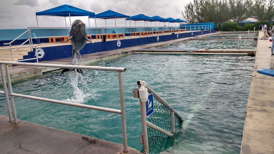 Water Grand Cayman Island Grand Cayman Cayman Islands Dolphins Dolphin Watching  Dolphin Fun Jumping Dolphin Dolphin Show  Free The Dolphins Save The Dolphins!