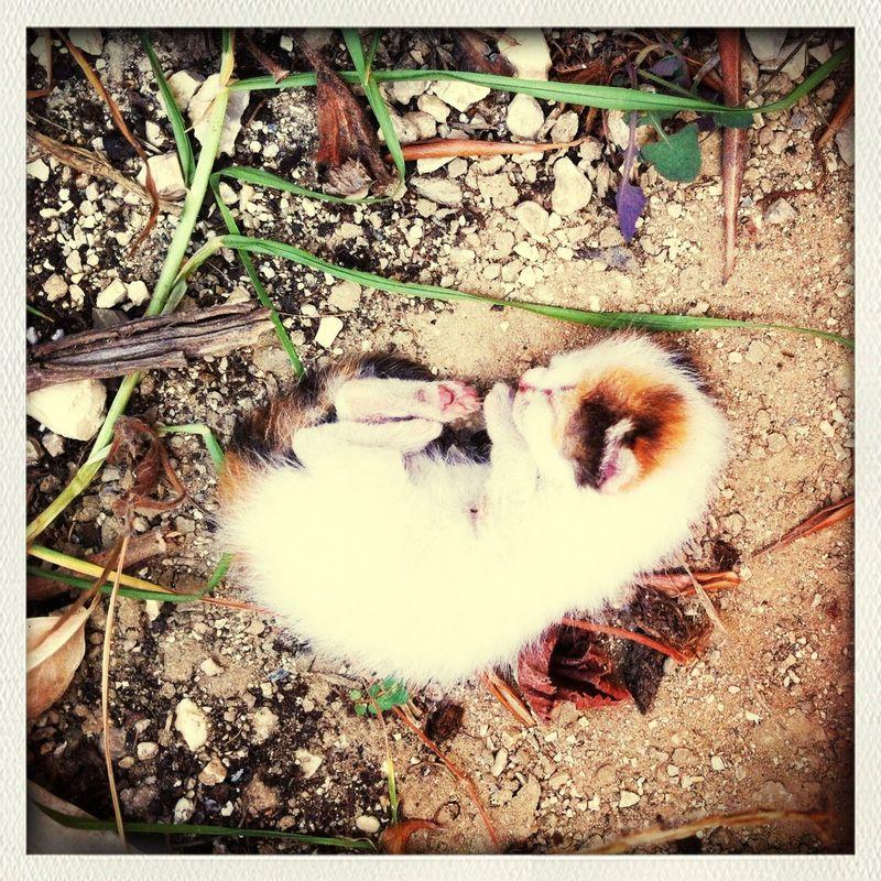 Babycat ❤ Cat Sleeping Sweet