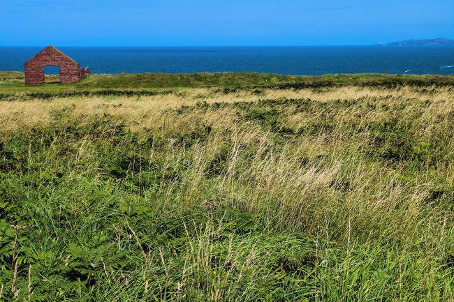 Beauty In Nature Blue Field Grass Grassy Green Color Horizon Over Water Nature Non-urban Scene Pembrokeshire Pembrokeshire Coast Scenics Sea Tranquil Scene Tranquility Wales Water