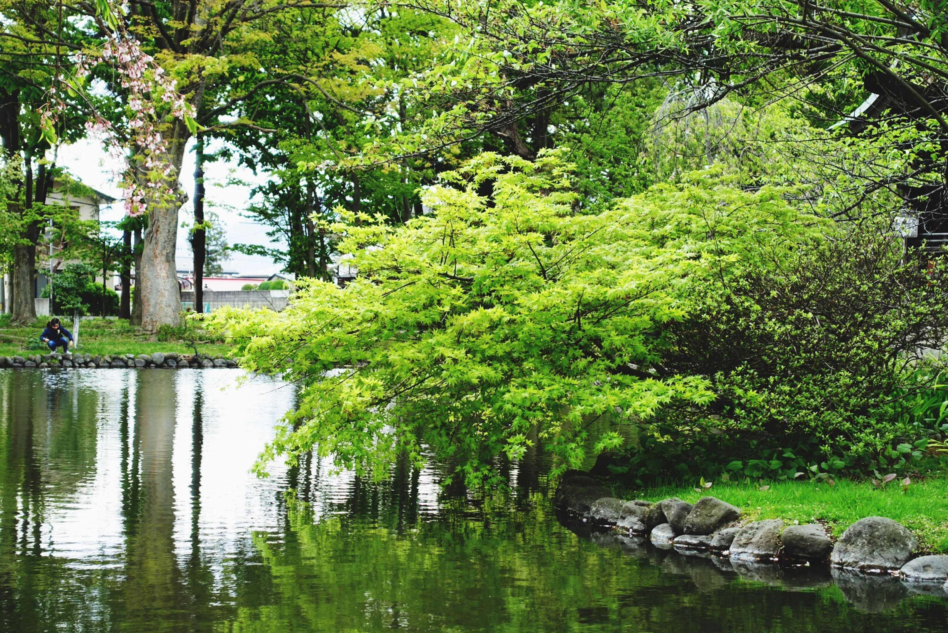 water, tree, green color, reflection, growth, tranquility, nature, waterfront, beauty in nature, lake, tranquil scene, pond, branch, river, scenics, plant, lush foliage, day, forest, green
