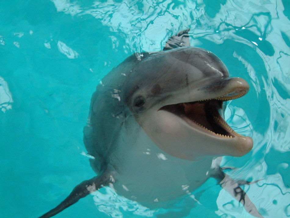 Beautiful stock photos of dolphins, Animal Themes, Close-Up, Day, Dolphin