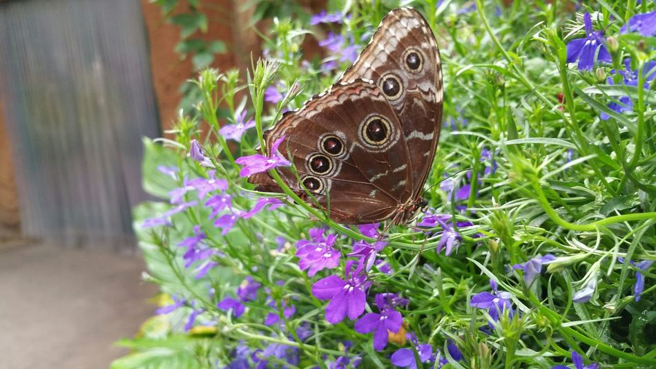 The Traveler - 2015 EyeEm Awards San Diego Safari Park Butterflies Butterfly EyeEm Best Shots EyeEm Nature Lover Eye4photography  Eye For Photography EyeEmbestshots EyeEm Best Shots - Nature