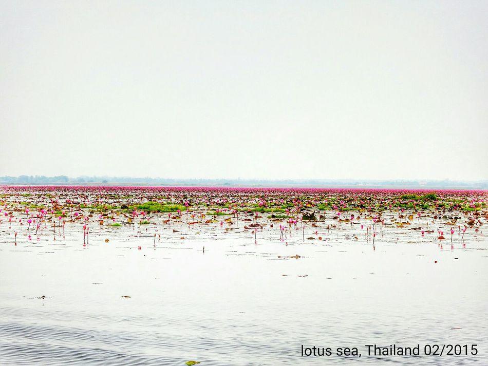 Lotus sea (Kumphawapi, Thailand) Enjoying Life Lake View Lakes  Nature