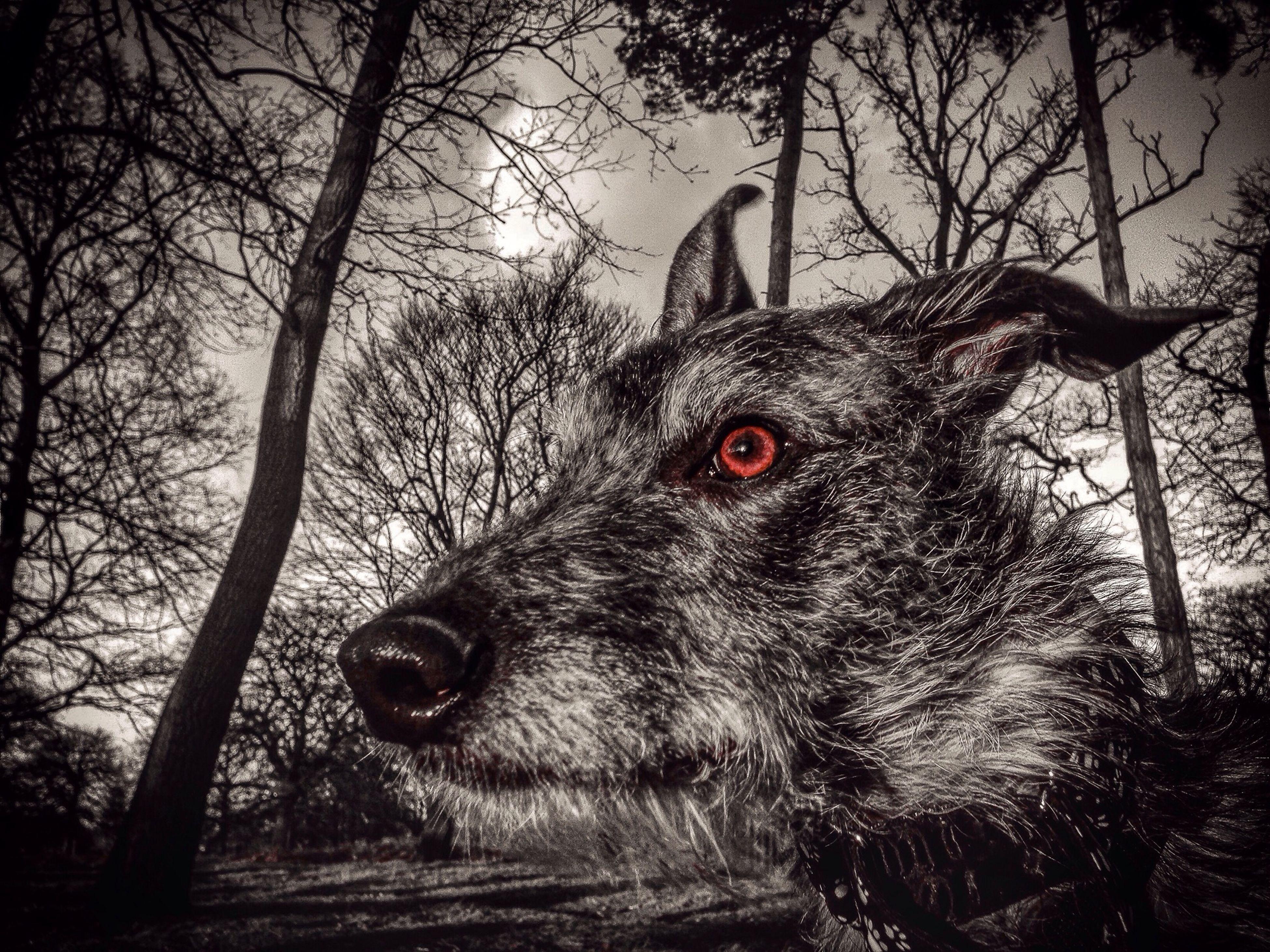 Hello World Animal Photography Animal Portrait LEO... The One Eyed Lurcher... Sighthound Lurcher Darkness And Light Hampton Hill Enjoying Life