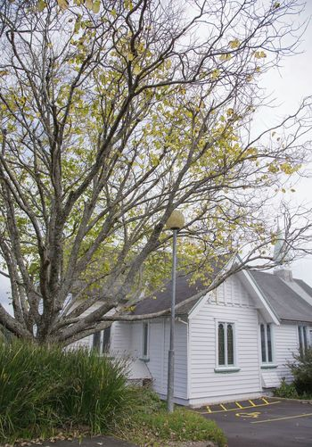St. Aidan Anglican church Tree Building Exterior No People Built Structure Architecture Day Outdoors Tranquility Growth Branch Nature Beauty In Nature Sky Flower Freshness Close-up Lifestyle City Impressionism Cloud - Sky Architecture