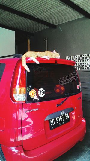 Don't disturb Relaxing Enjoying Life Hello World Check This Out Cats