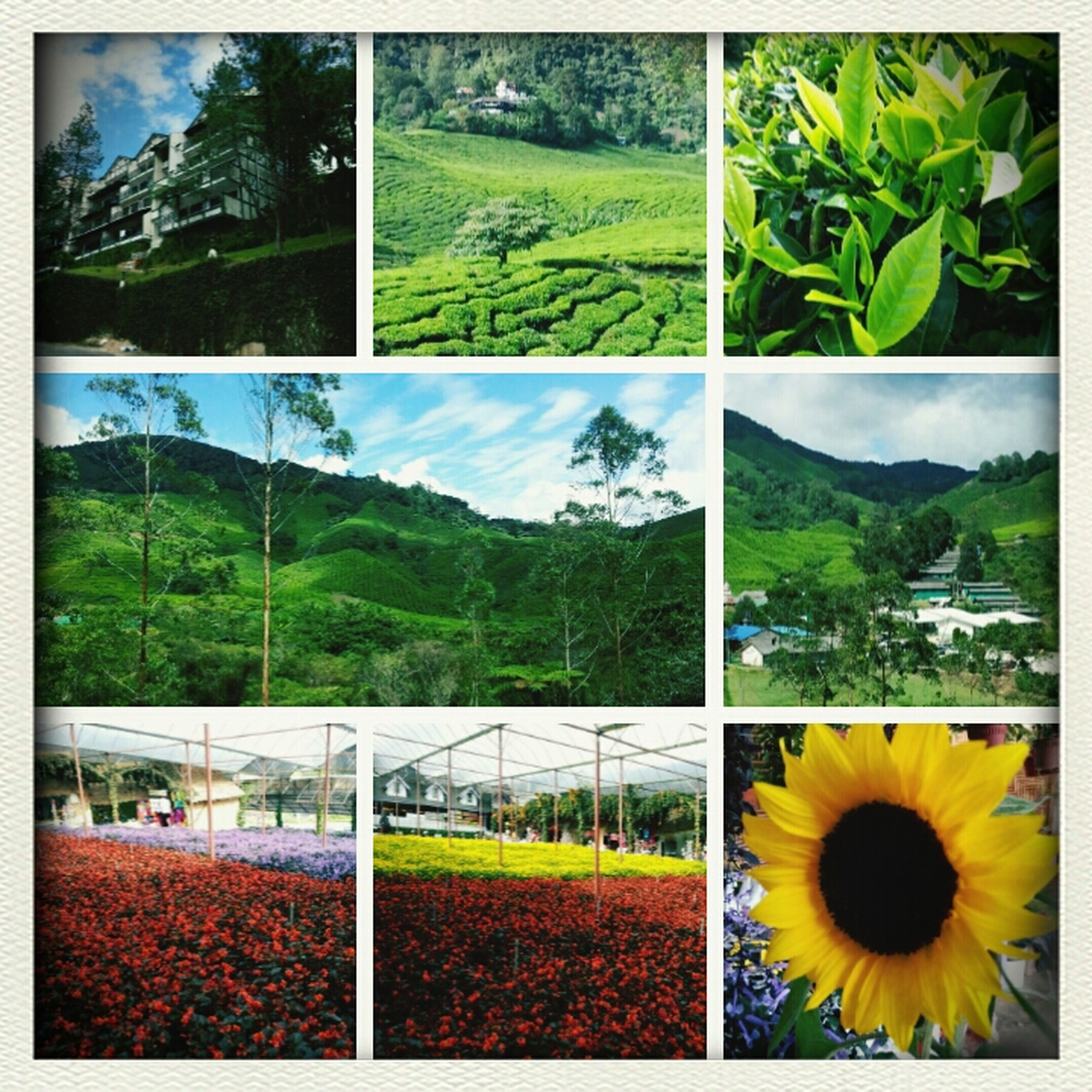 Cameron Highland @ Malaysia Nature
