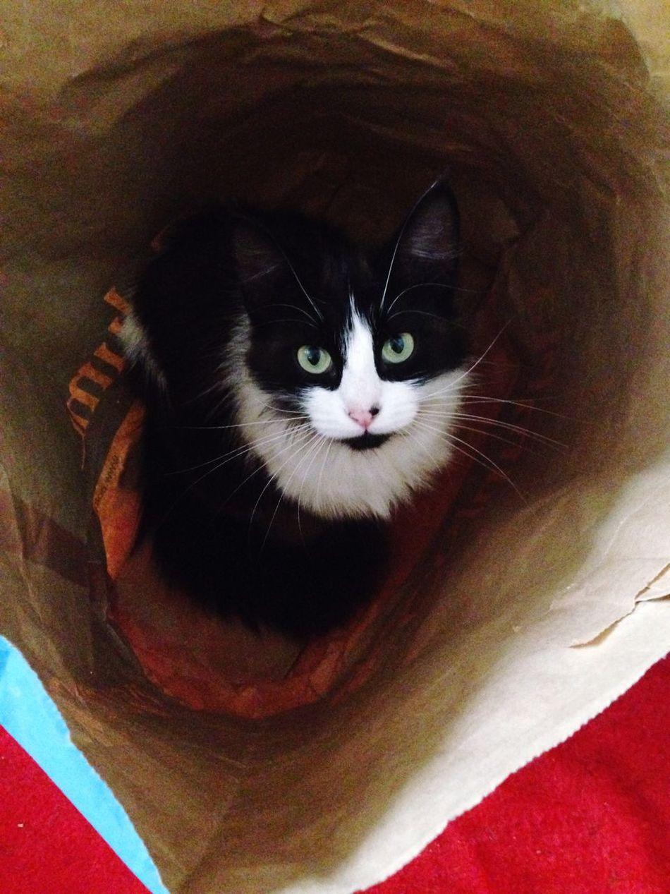 Cat Lovers Catsagram Cat♡ Greeneyes :) Petstagram Pet