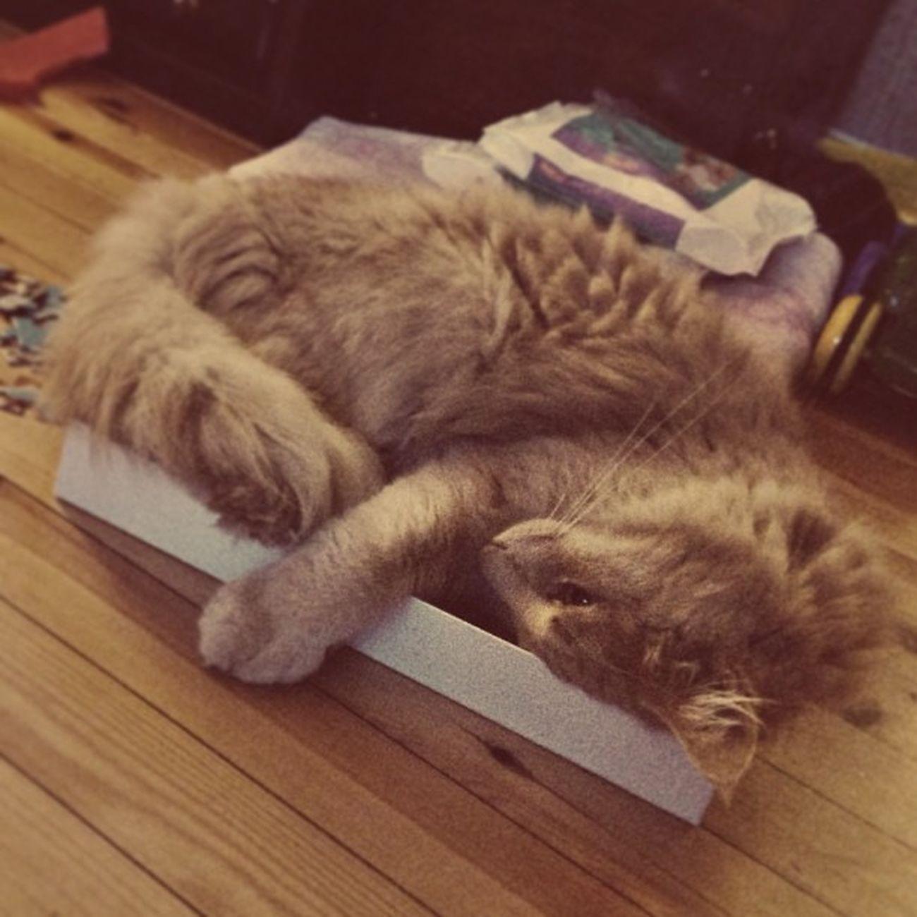 Puslespillesker kan brukes til så mangt... Puslespill Katt Pus Funny