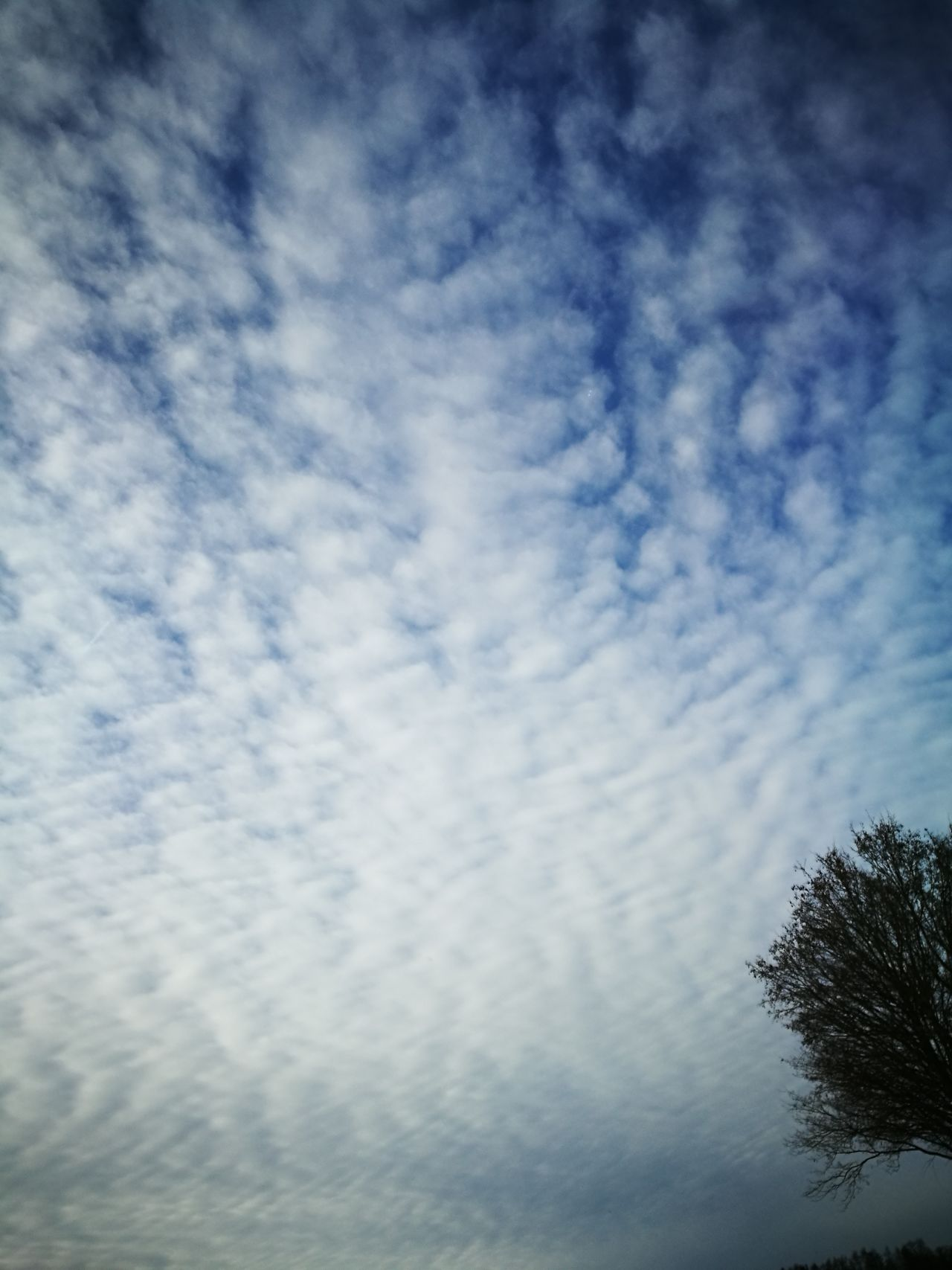 Cloud - Sky Sky Nature Beauty In Nature Scenics Tree Outdoors Clouds And Sky Weather Photography