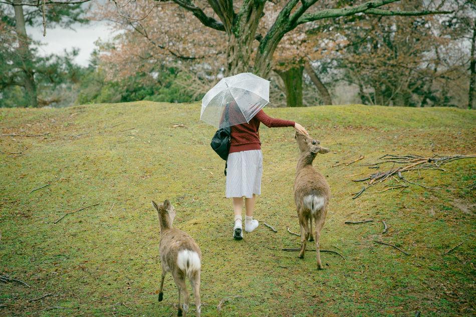Beautiful stock photos of hirsch, 30-34 Years, Animal Themes, Animal Wildlife, Animals In The Wild