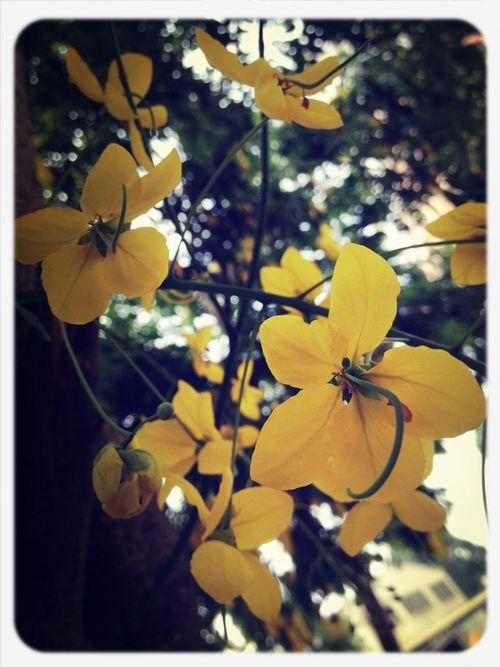 路邊的美好,夏天的顏色 Flower On The Way To