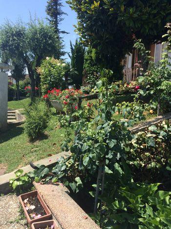 Grandmother's garden Garden Gardening Flowers Green Summer Plants Lovely Spring Spring Flowers Summertime