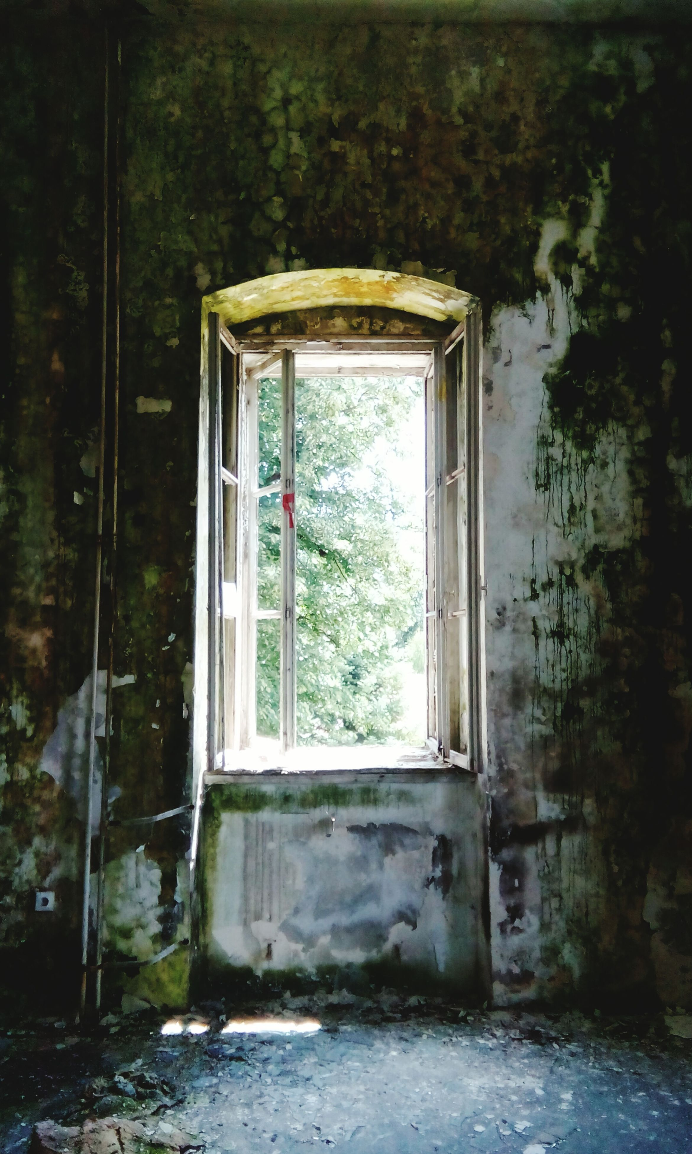 window, indoors, built structure, architecture, house, door, glass - material, closed, abandoned, transparent, open, tree, day, entrance, old, obsolete, damaged, doorway, no people, building exterior