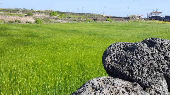 Udo JEJU ISLAND  Wind Hello World Green Color Grass