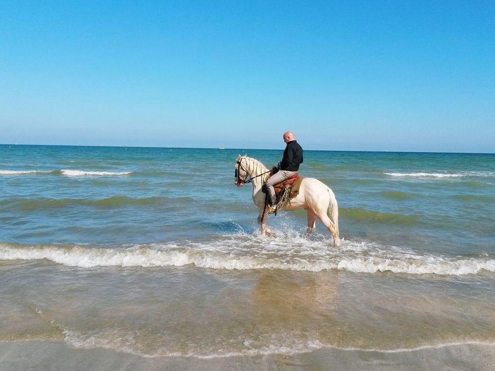 Cavallo Cavallo Bianco nei pressi di Cesenatico Beach Spiaggia Seaside Romagna Italy Summer Horse
