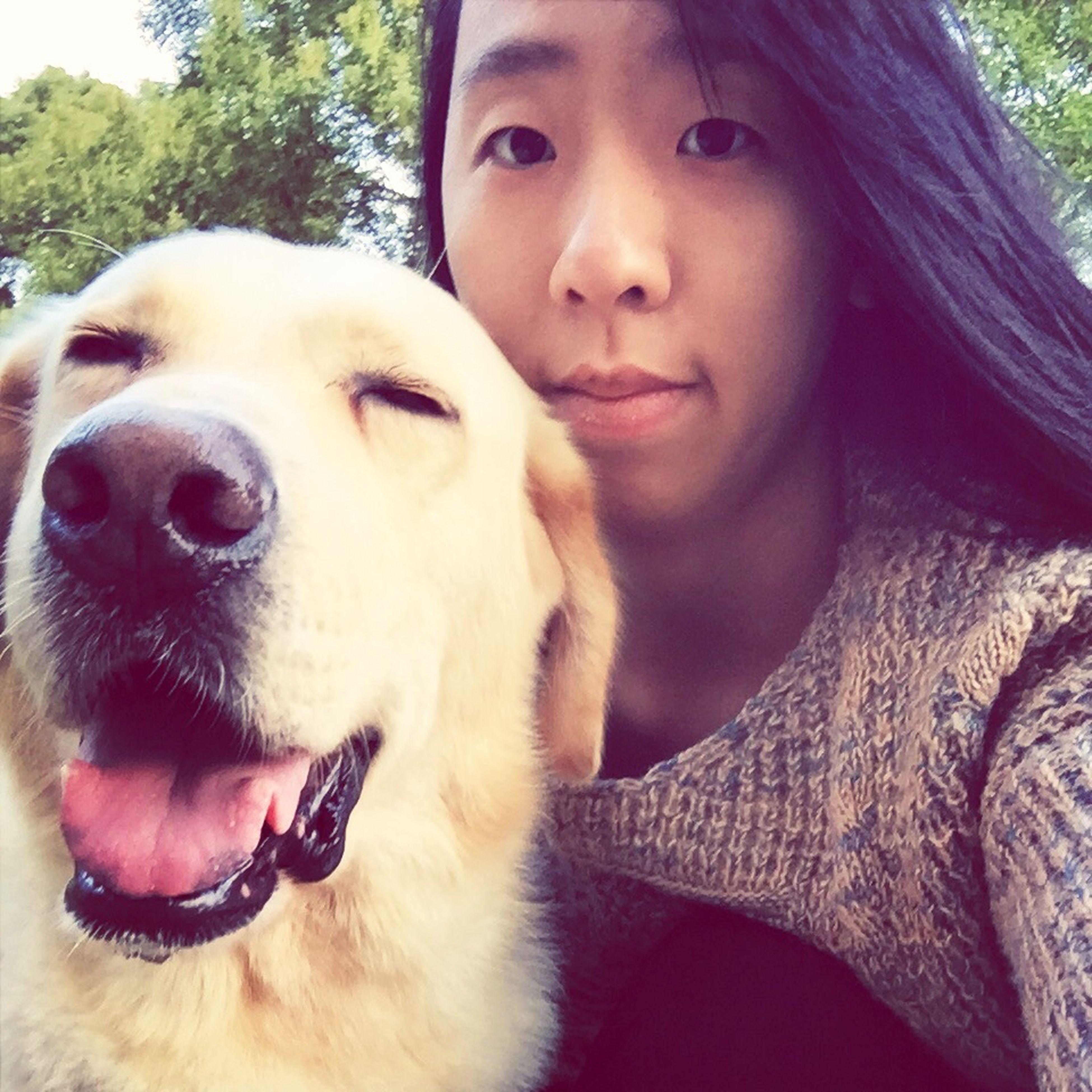Labrador I Love My Dog
