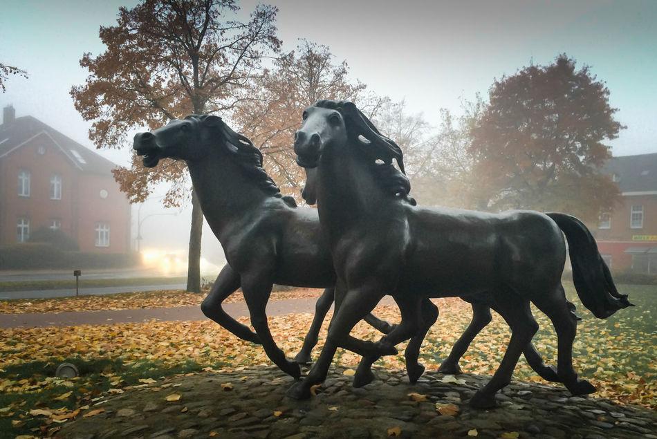 Cityscapes Contrast Dynamic Foggy Day Horses November Pferdemarkt Statue Showcase: November