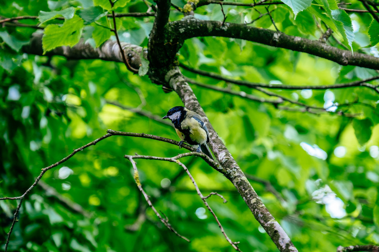 Animal Themes Animal Wildlife Animals In The Wild Beauty In Nature Bird Branch Close-up Day Focus On Foreground Green Color Growth Nature No People One Animal Outdoors Perching Tree