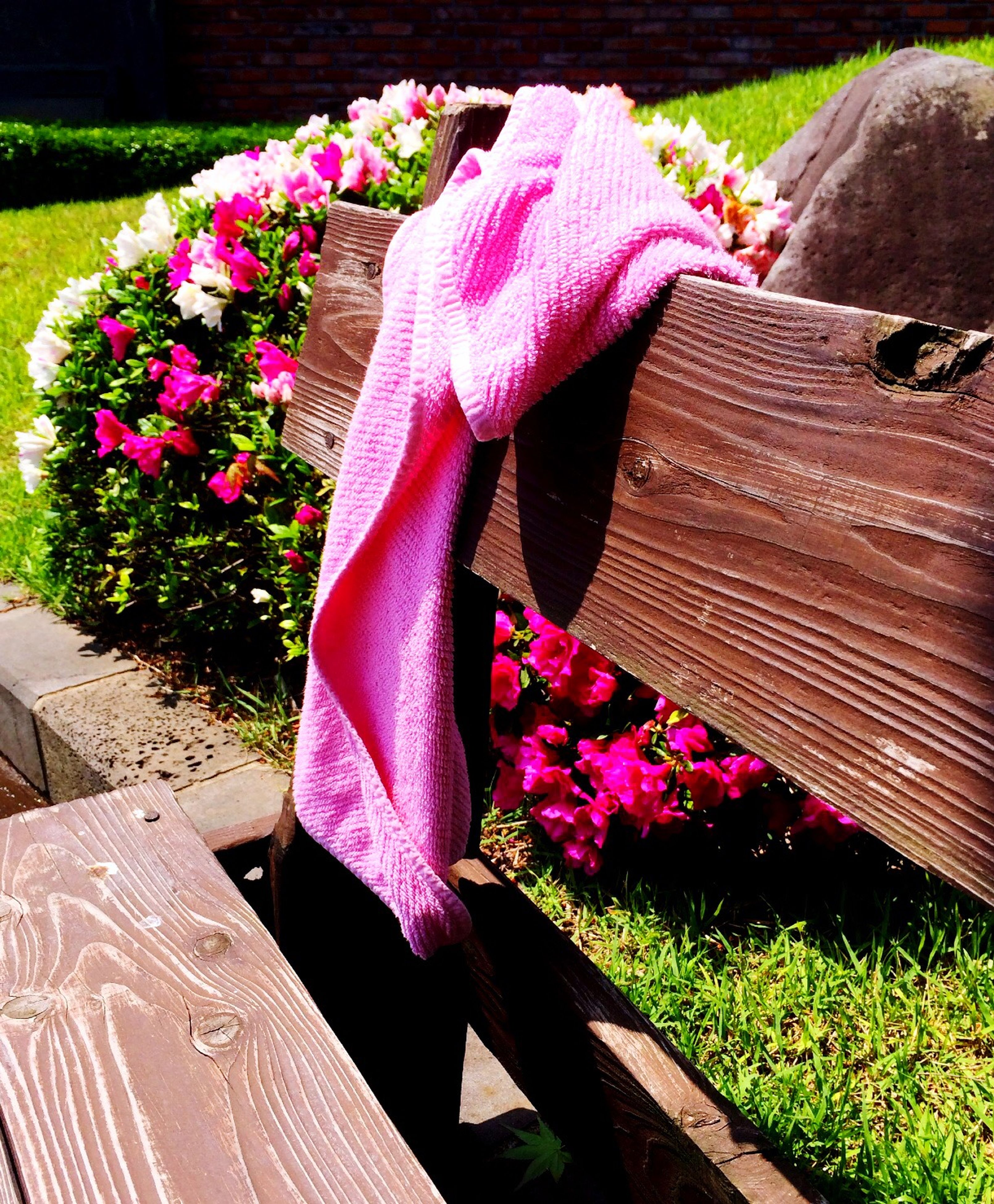 flower, pink color, fragility, freshness, growth, petal, plant, park - man made space, beauty in nature, sunlight, day, nature, outdoors, bench, high angle view, grass, wood - material, blossom